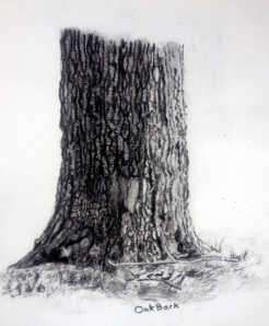 Oakbark study