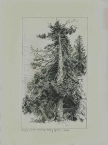 Mallory Agerton, copy after Ivan Shishkin