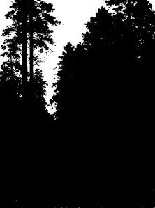 Shishkin forest dusk notan 2